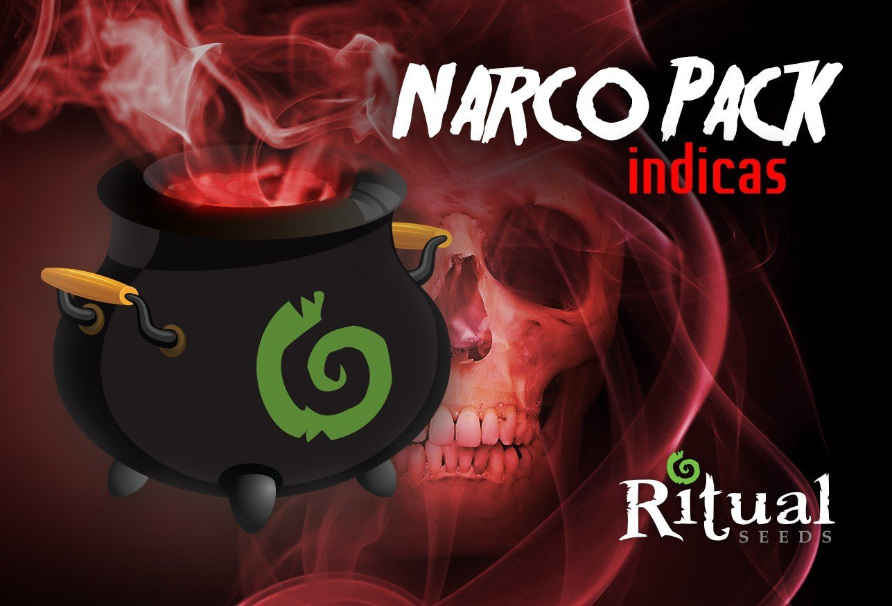 Narco pack indicas 6uds semillas feminizadas Ritual seeds