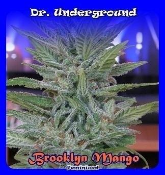 Brooklin Mango fem