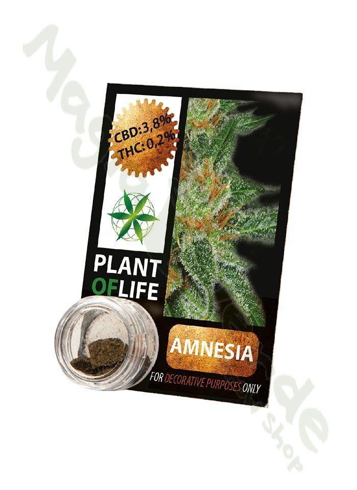 CBD Hash 3,8% Amnesia
